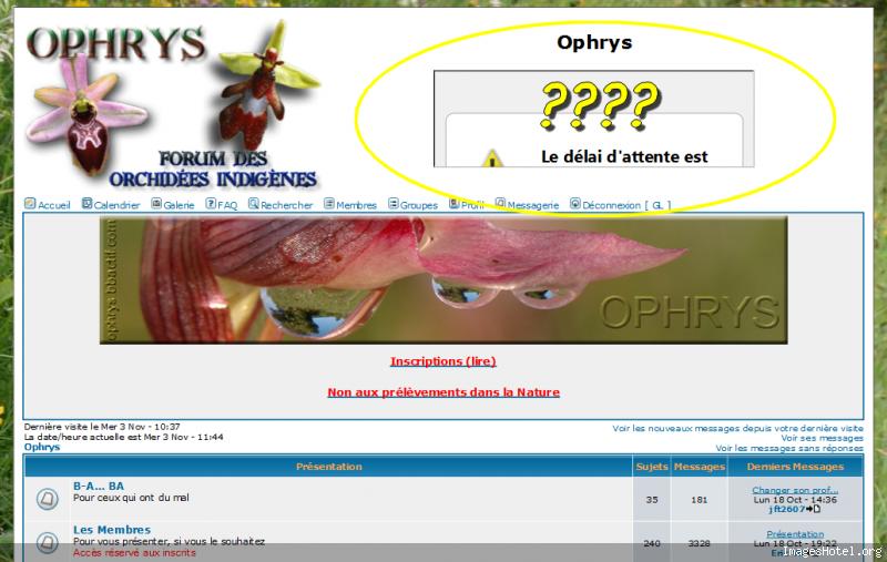 Problème avec IMAGEHOTEL ??? Ophrys1288781085213