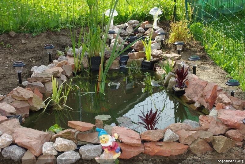 Nature bassin la mare et le bassin de jardin naturel afficher le sujet - Petit bassin pour jardin ...