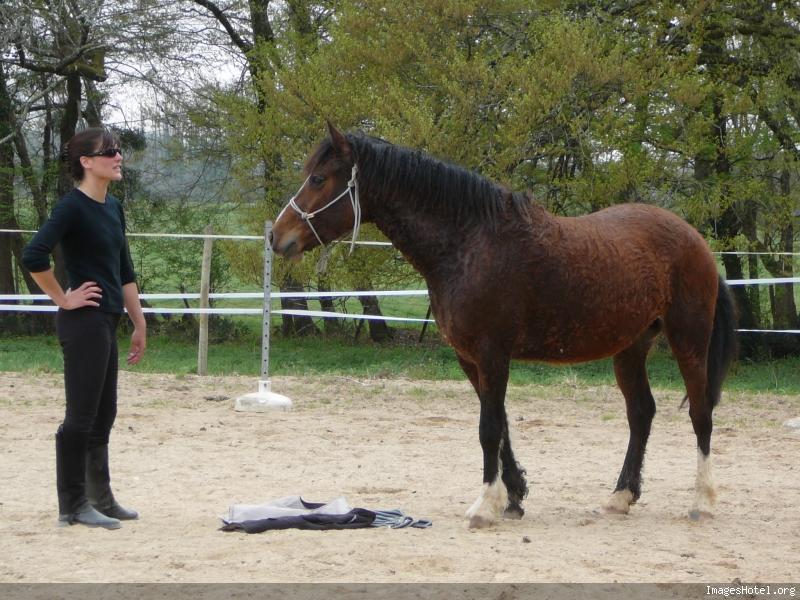 cheval hypoallergenique 1030493