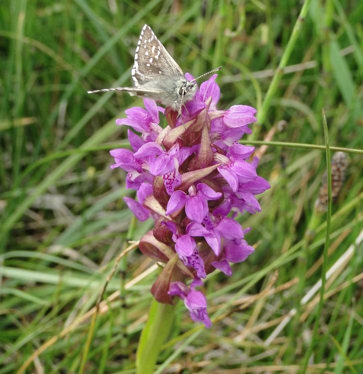 orchidees et papillons Dsc00501