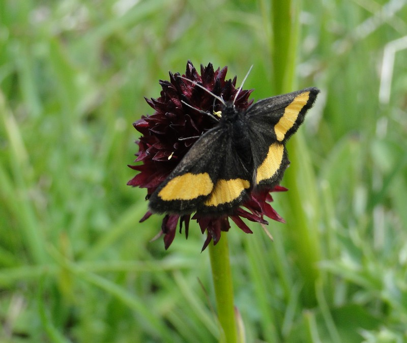 papillons inconnus Dsc02014
