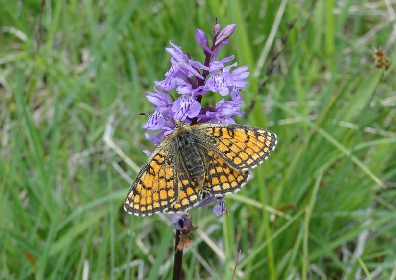 papillons inconnus Dsc02115