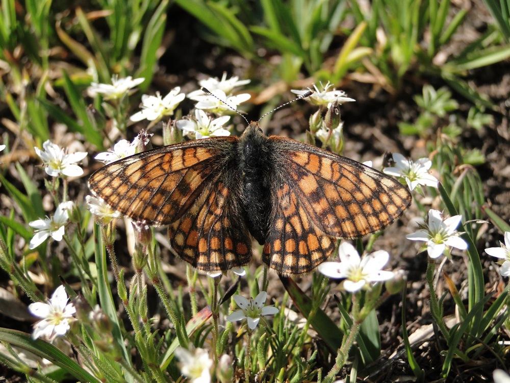papillon ??? Dsc03440