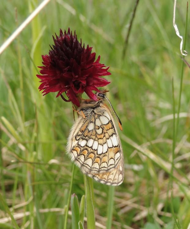 orchidees et papillons Dsc03793