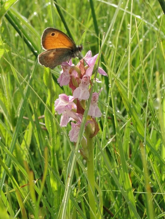orchidees et papillons Dsc04194