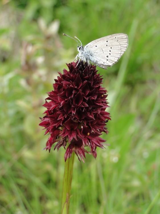 orchidees et papillons Dsc05324