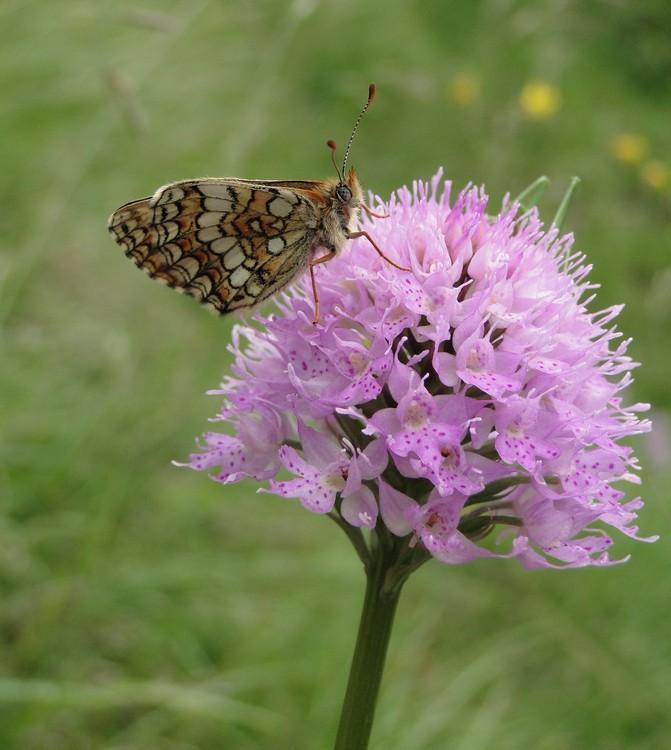 orchidees et papillons Dsc05670