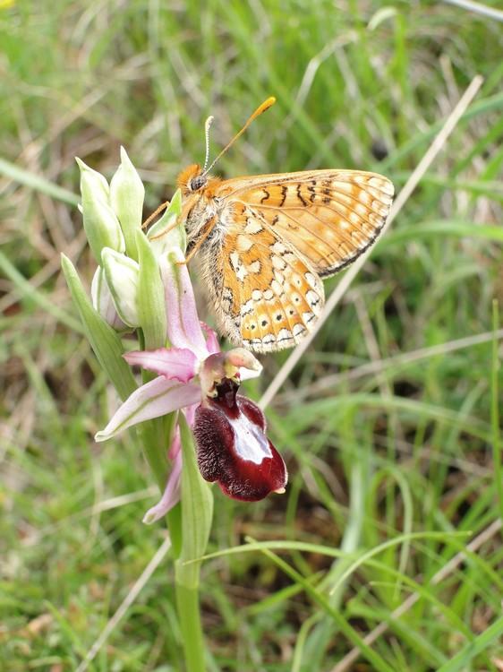 orchidees et papillons Dsc07460_1
