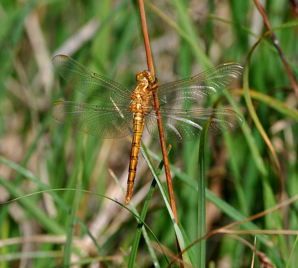 libellules et papillons Granierconjux400mm144