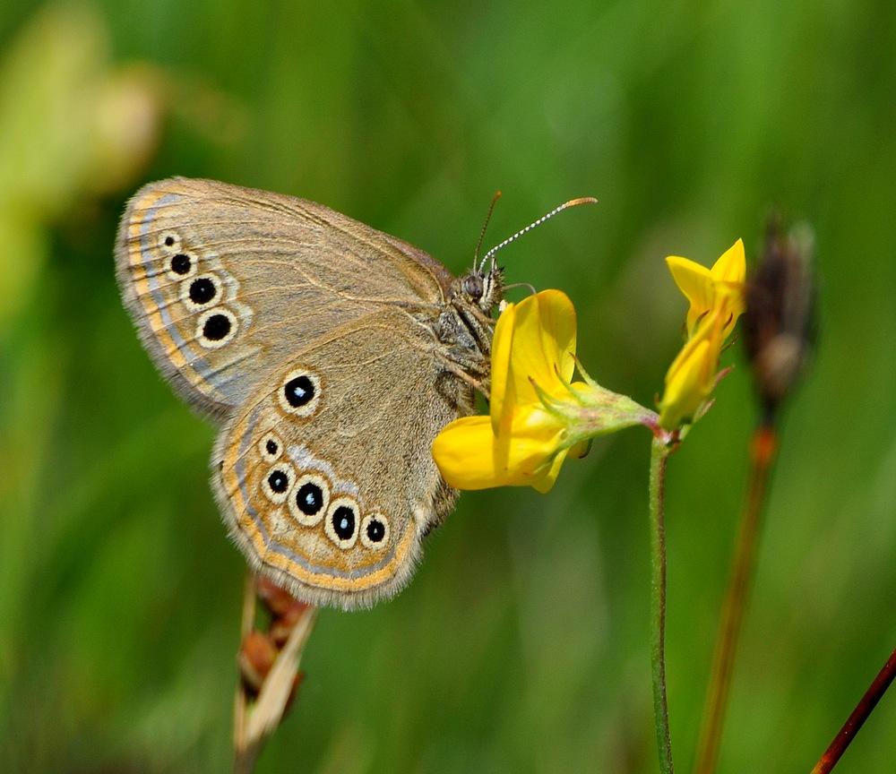 libellules et papillons Granierconjux400mm255