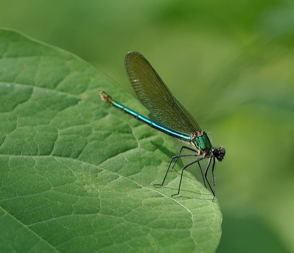 libellules et papillons Granierconjux400mm375