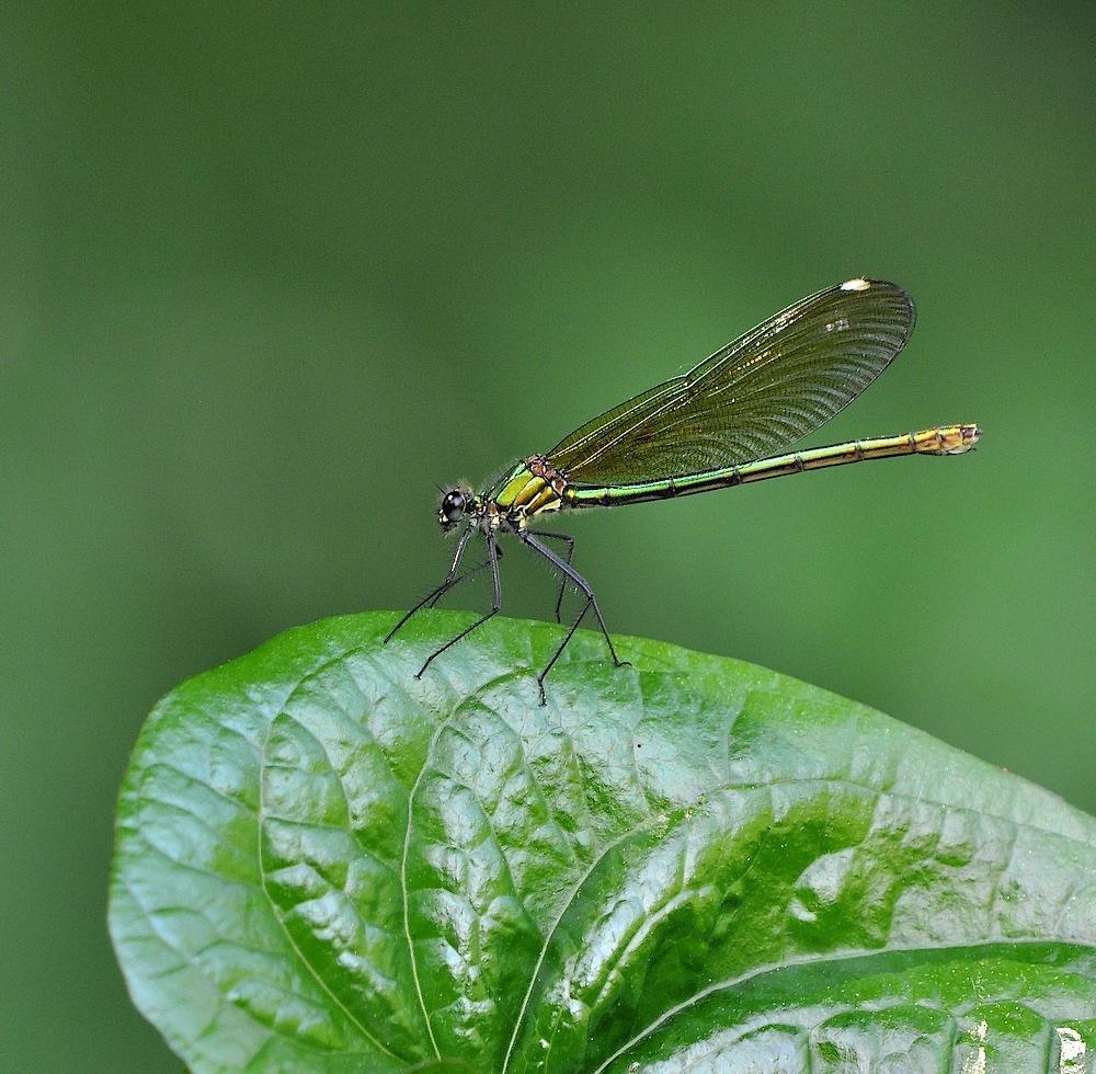 libellules et papillons Granierconjux400mm385