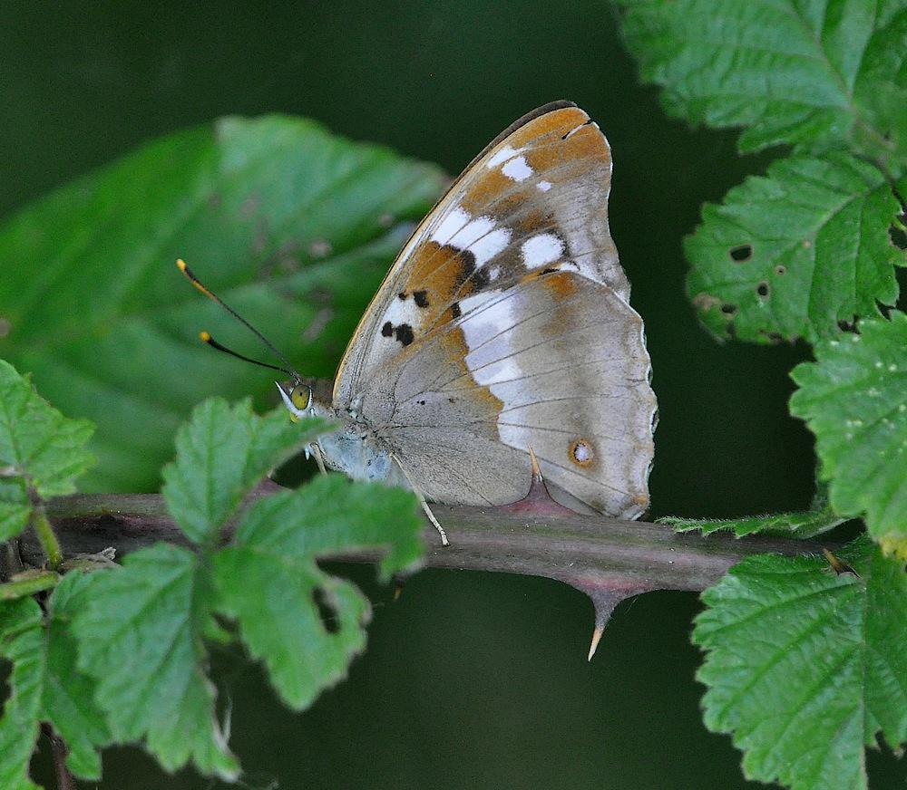 libellules et papillons Granierconjux400mm388