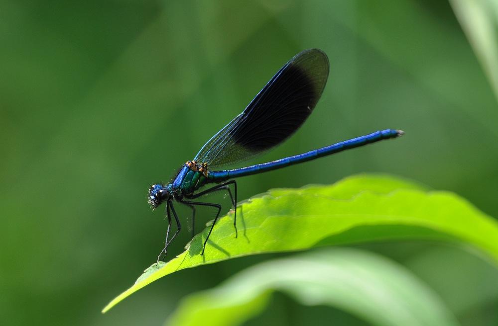 libellules et papillons Granierconjux400mm401