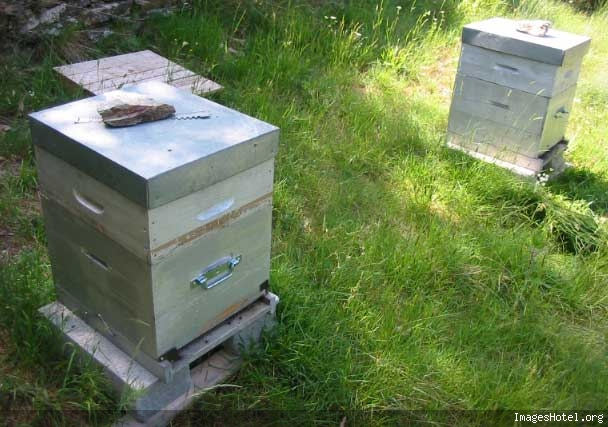 Apiculture & ruchers Img7321