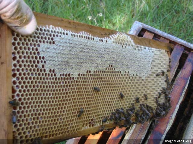 Apiculture & ruchers Img7323