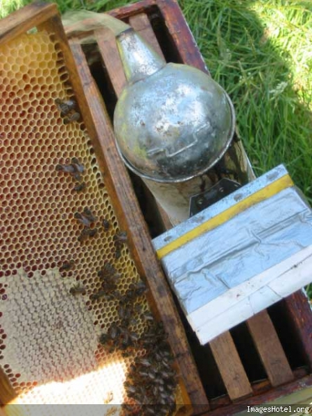 Apiculture & ruchers Img7330